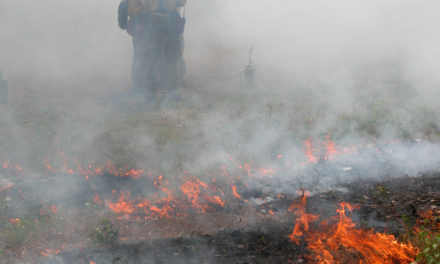 Forest Service to Conduct Controlled Burns