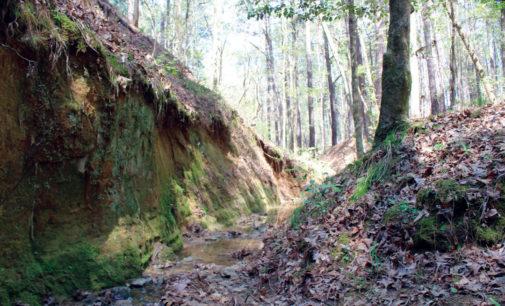 Davy Crockett National Forest, Grasslands Resource Management Plan to Undergo Revisions