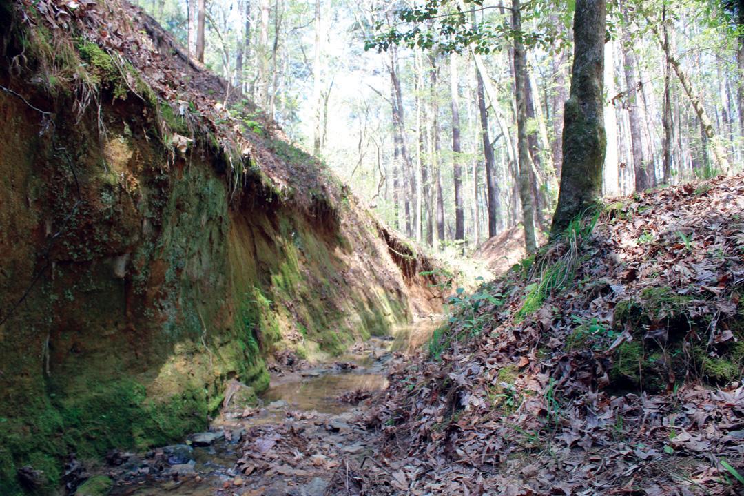 Forest Resource Management : Davy crockett national forest grasslands resource