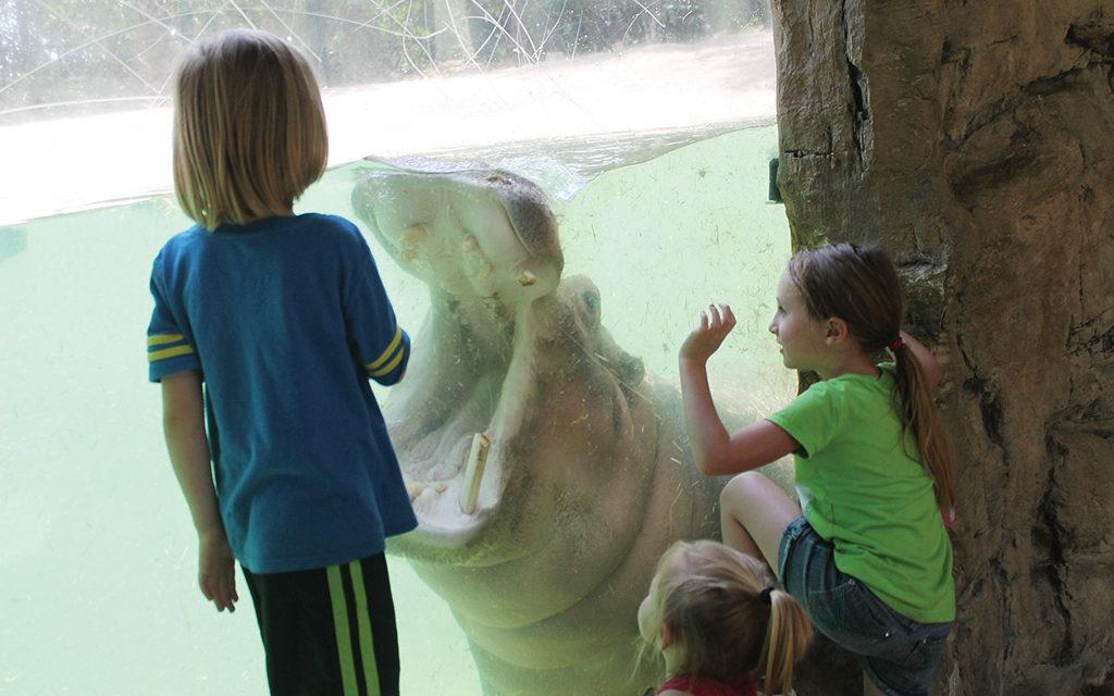 Lufkin's Ellen Trout Zoo Celebrates 50 Years