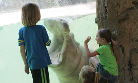 Lufkin's Ellen Trout Zoo Celebrates 50 Years