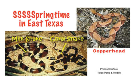 Snakes: It's SSSSSpringtime in East Texas