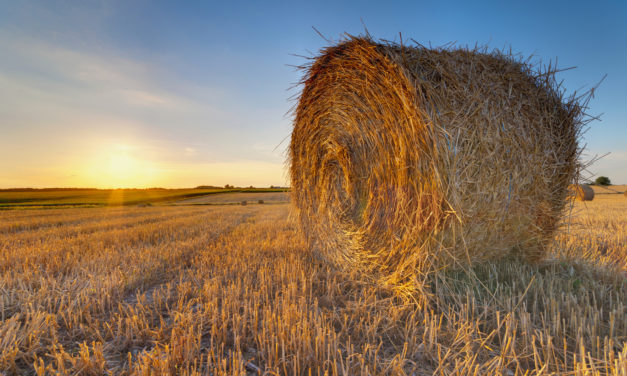 County Extension Agent Discusses Hay Shortage